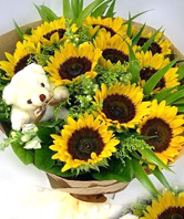 10 Sunflowers with A bear